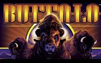 buffalo pokies